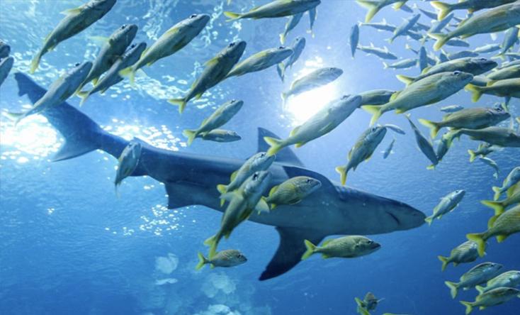Thế giới cá mập hung dữ