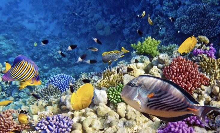 Thế giới cá sắc màu