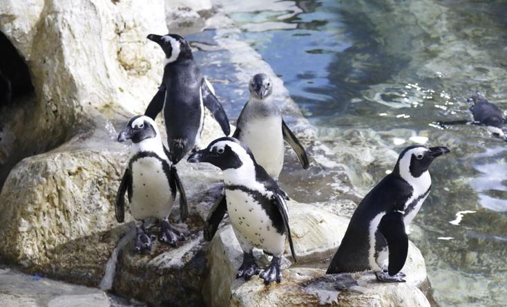 Bữa ăn của chim cánh cụt