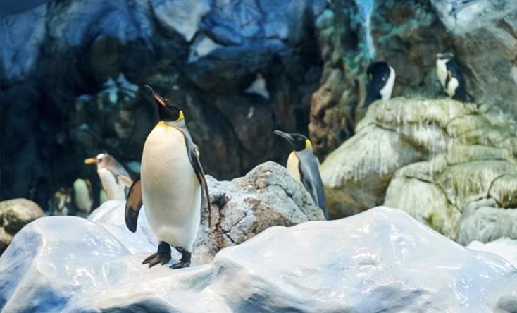 Thế giới chim cánh cụt