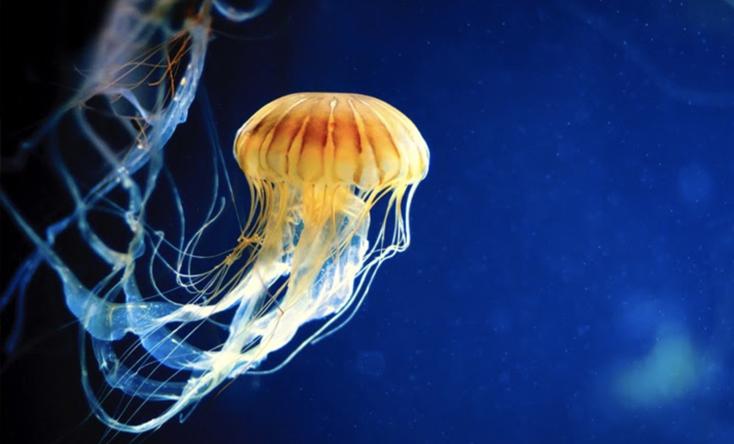 Thế giới sứa