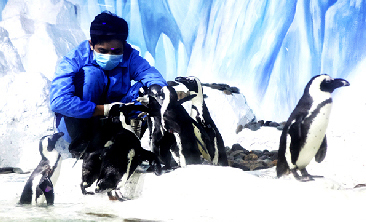 Chương trình cho chim cánh cụt ăn
