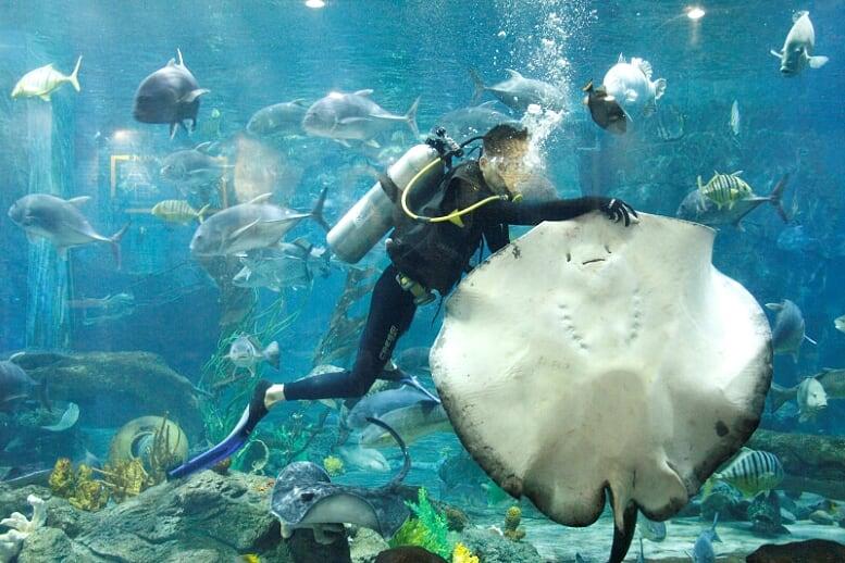 Cá đuối màng